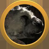 LastGuardian-E32015-Nominee